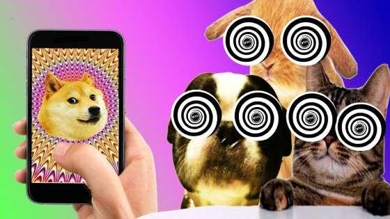 Гіпноз Для Кішок І Собак 1.0