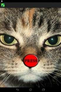Пранк Скажений Кіт Вереск 2.0